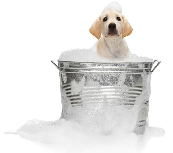 dog in bucket of soap and water